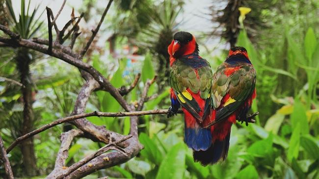 зоопарк в бали